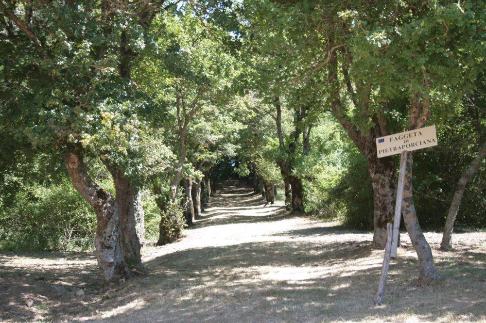 IL CUORE DELLA VALDICHIANA Chianciano Terme, la base per la tua vacanza all'aria aperta